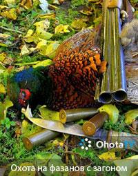 Охота на фазанов с загоном