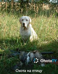 Охота на птицу, Рязанское охотхозяйство
