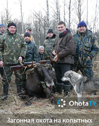 Загонная охота на копытных в Смоленской области