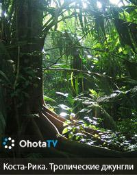 Коста-Рика. Тропические джунгли
