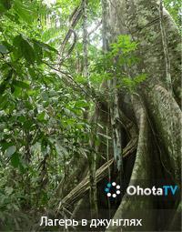 Лагерь в джунглях