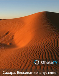 Сахара. Выживание в пустыне