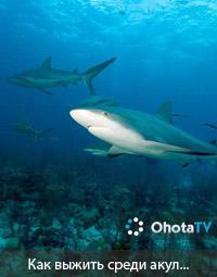 Как выжить среди акул...