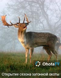 Открытие сезона загонной охоты на копытных животных