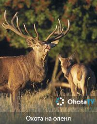 Охота на оленя в Оре-Луар