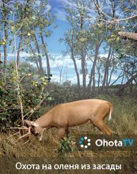 На белохвостого оленя из засады в период гона