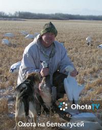 Завершение сезона охоты на белых гусей
