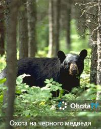 Охота на черного медведя верхом на лошадях