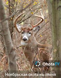Ноябрьская охота на белохвостого оленя в Монтебелло