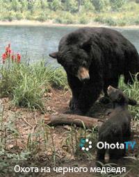 Охота на черного медведя (барибала) в северном Саскачеване