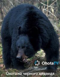 Охота на черного медведя в провинции Саскачеван