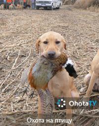 Охота на птицу на западе и востоке