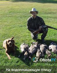 Охота на водоплавающую птицу в провинции Альберта