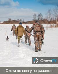 Охота по снегу на фазанов