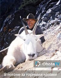 В погоне за горными козами