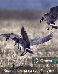 Водная охота на гусей и уток в Гумбольдте