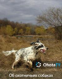 Об охотничьих собаках