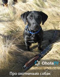 Веселые истории про охотничьих собак