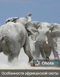Особенности африканской национальной охоты