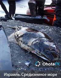 Израиль. Подводная охота в Средиземном море