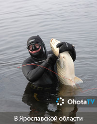 Подводная охота в Ярославской области