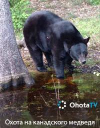 Охота на канадского медведя