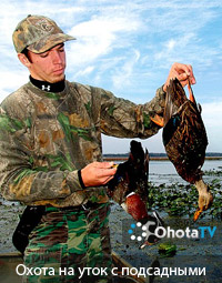 Охота на уток с подсадными на озере Мичиган