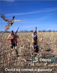 Охота на оленей и фазанов