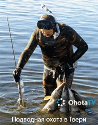 Соревнования по подводной охоте в Твери