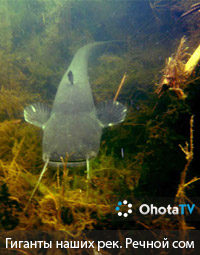 Речной сом   Арсенал подводного охотника: маска, трубка, ласты