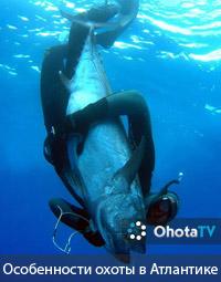 Особенности подводной охоты в Атлантике