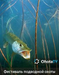 Первый фестиваль подводной охоты
