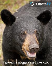 Охота на медведя в Онтарио