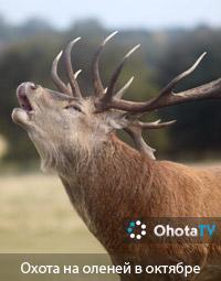 Охота на оленей в октябре