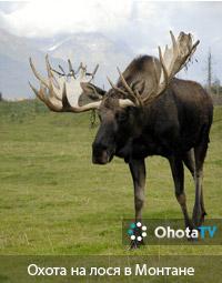 Охота на лося в Монтане