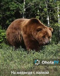 Охота на медведя с применением лаек