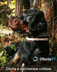 Охота и охотничьи собаки