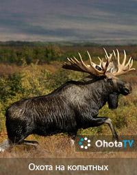 Охота на копытных в европейской части России