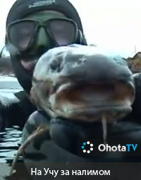 охота на рыбалку налим