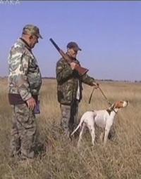 Парные испытания легавых собак в Запорожской области. Ч. 1.