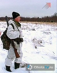 Вологодская область. Охота с эстонскими гончими. Часть 2