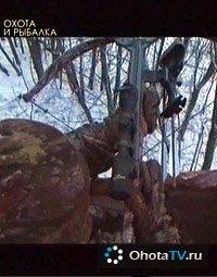 Охота на белохвостого оленя в разгар гона
