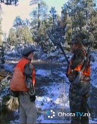 Охота на чернохвостого оленя зимой