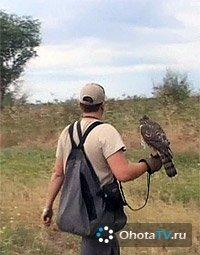 Разведение ловчих птиц