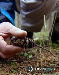 Следы животных в лесу, белки