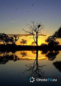 Африканская охота с Сергеем Ястржембским Эпизод 6