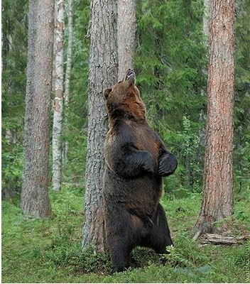 Камчатский медведь. Охота на Камчатке